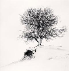 Hill Edge Tree, Shibecha, Hokkaido, Japan