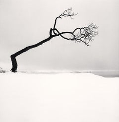 Kussharo Lake Tree, Study 17, Kotan, Hokkaido, Japan