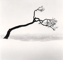 Kussharo Lake Tree, Study no 9, Kotan, Hokkaido, Japan, 2009  - Michael Kenna