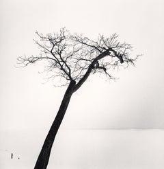 Lake Saroma Tree, Topushi, Hokkaido, Japan