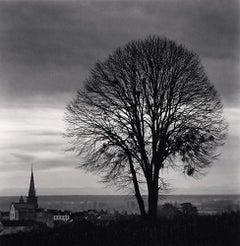 Olivia's Tree, Study 1, Meursault, Bourgogne, France