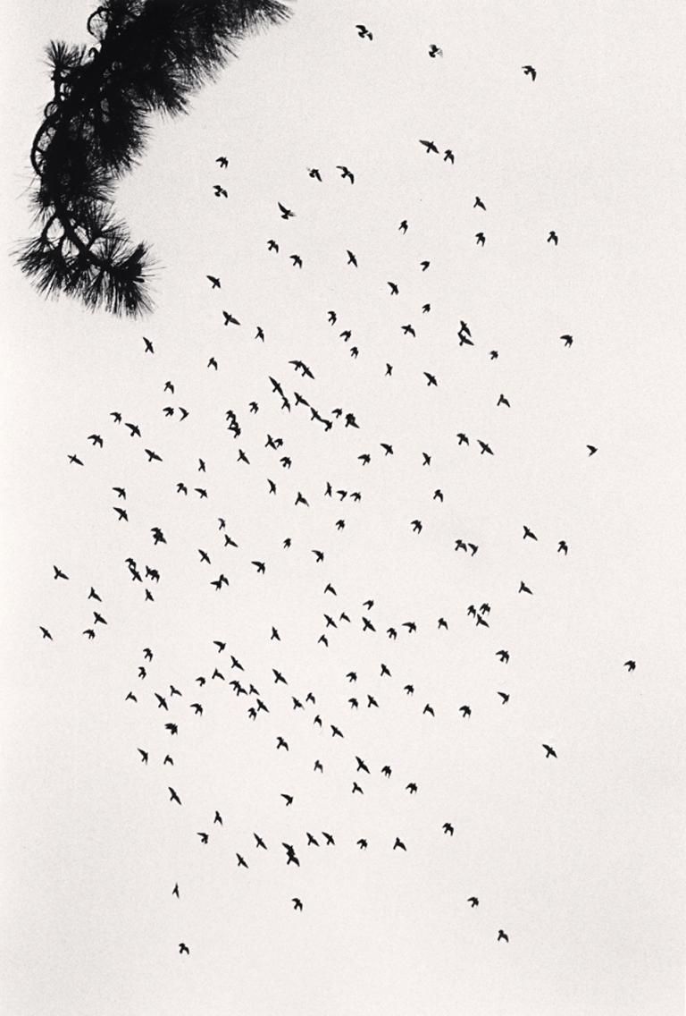 Michael Kenna Figurative Photograph - One Hundred and Seventy Five Birds, San Francisco, USA