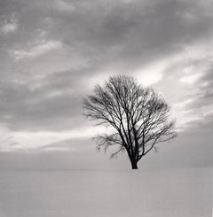 Philosopher's Tree, Study 6, Biei, Hokkaido, Japan