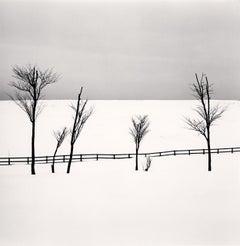 Six Sipetca Trees, Shibecha, Hokkaido, Japan