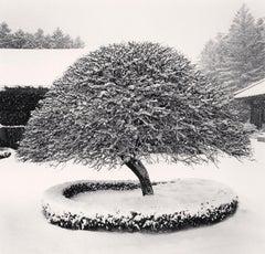 Snow Tree, Woljeongsa Temple, Gangwando