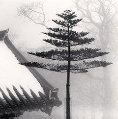 Temple Tree, Jonjaamji, Jeju Island, South Korea