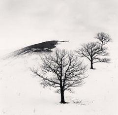 Three Trees in Pasture, Hokkaido, Japan