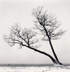 Two Leaning Trees, Study 2, Kussharo Lake, Hokkaido, Japan