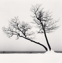Two Leaning Trees, Study 3, Kussharo Lake, Hokkaido, Japan