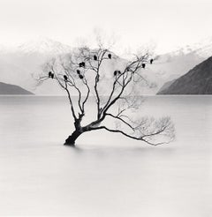 Wanaka Lake Tree, Study 2, Otafo, New Zealand