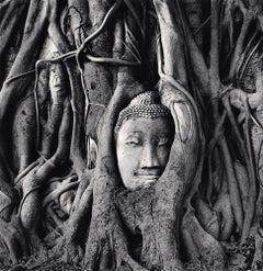 Wat Mahathat Buddha Head, Ayutthaya, Thailand