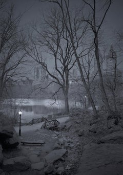 Michael Massaia. Central Park, New York City, The Ramble, 2018