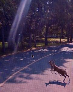 Street View: A Series of Unfortunate Events #2 – Michael Wolf, Google, Deer