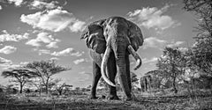 Mammoth - Michel Ghatan, contemporary, black and white photo, elephant, 40x60 in