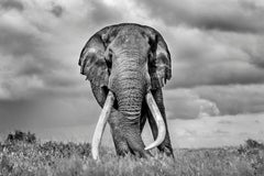 Mammoth - Michel Ghatan, contemporary, black and white photo, elephant, 60x90 in