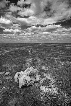Skull on the Dry Lake - Michel Ghatan, landscape, black and white, 36x24 in
