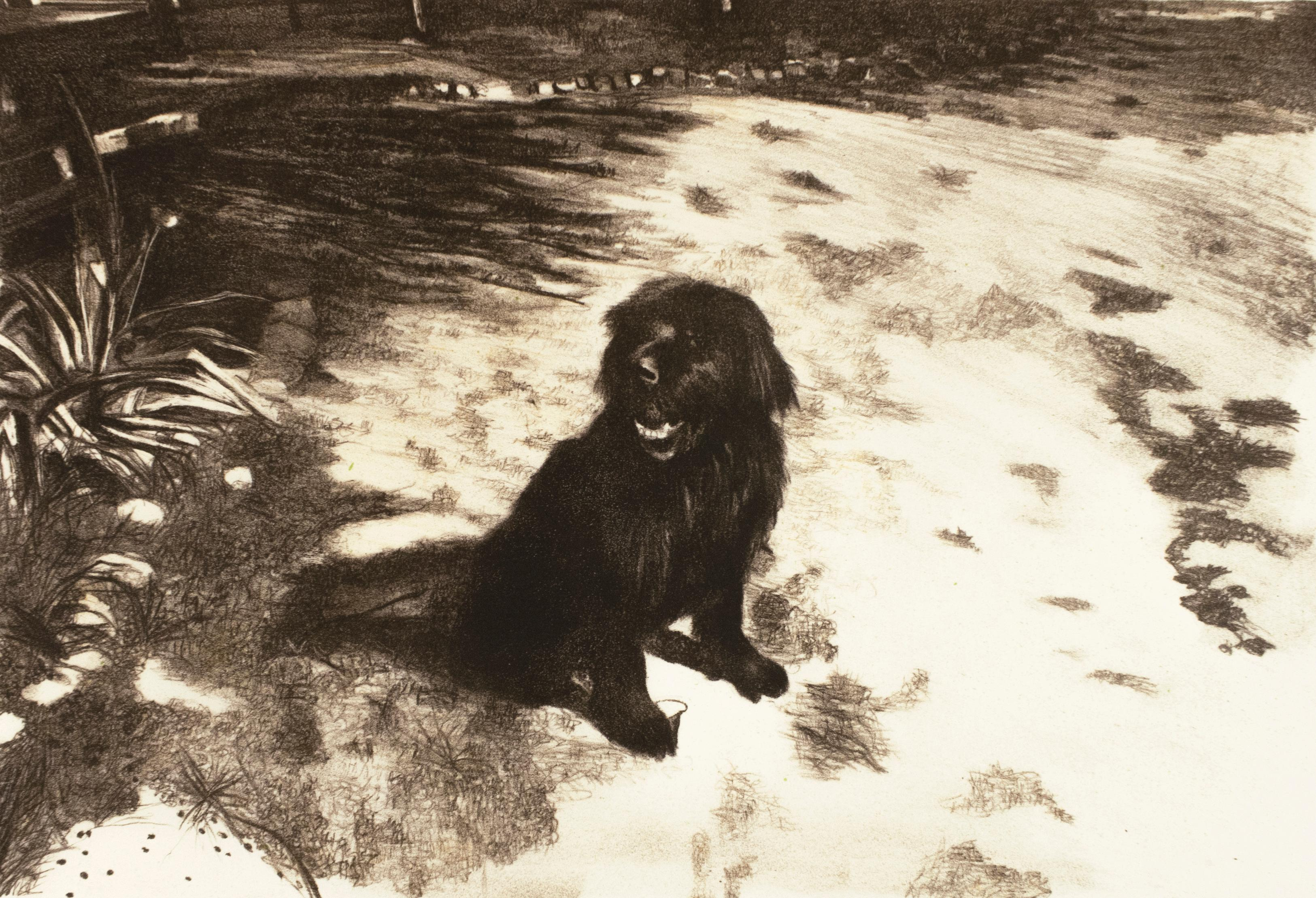 Dog: realist expressive black and white portrait drawing of pet dog in the sun