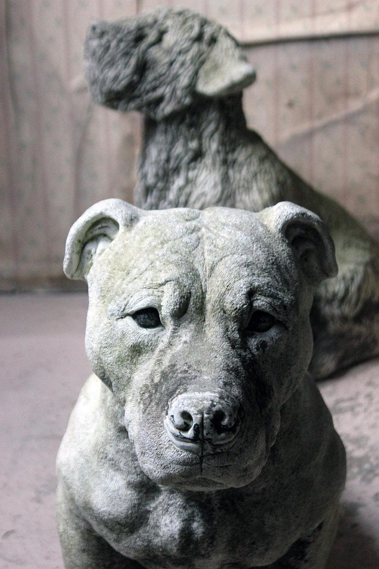 The very well modelled and large life size cast stone Staffordshire Bull Mastiff, in sitting position, having a closed mouth, black painted eyes and muzzle and seated alert, the whole of hyper-real form with good skin detailing and being inscribed