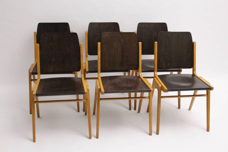 Stackable bicolored dining room chairs designed by Franz Schuster (1892-192) for the Forum Stadtpark Graz 1959, also named Austro Chairs, and executed by Wiesner, Hager Austria. Franz Schuster was a very important Viennese designer and