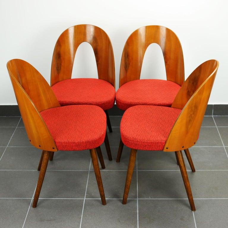 Mid-Century Modern Mid Century Dining Chairs by Antonín Šuman for Tatra Nabytok Np, 1960s