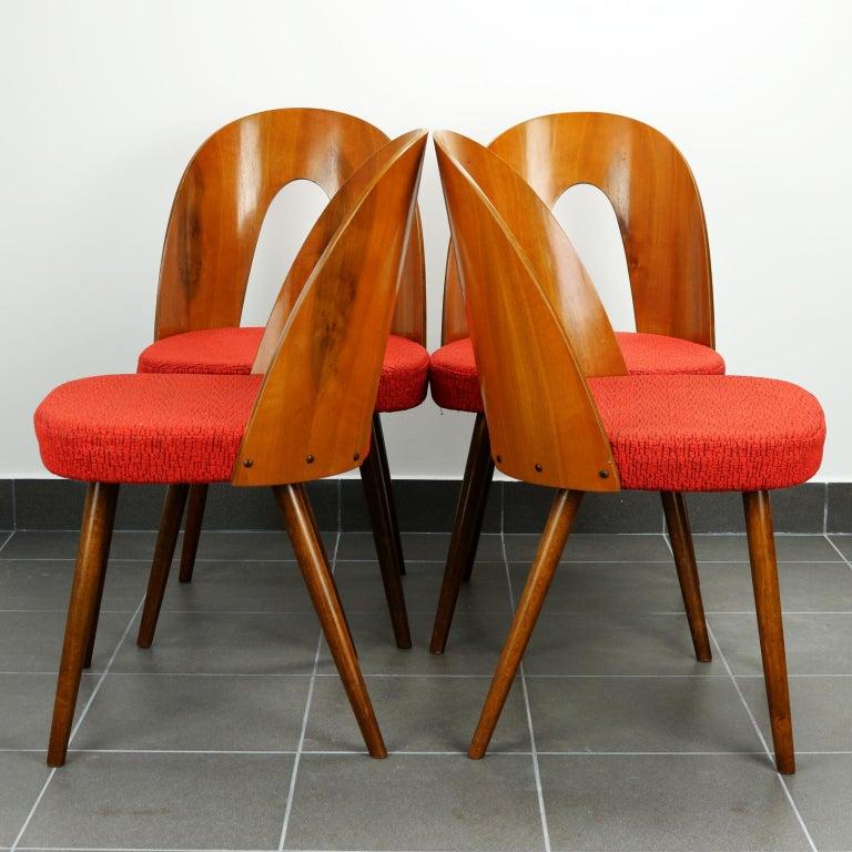 Czech Mid Century Dining Chairs by Antonín Šuman for Tatra Nabytok Np, 1960s