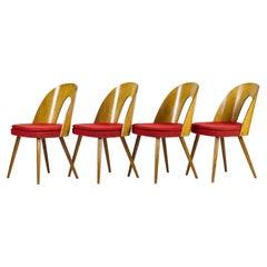 Mid Century Dining Chairs by Antonín Šuman for Tatra Nabytok Np, 1960s