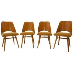 Mid Century dining chairs designed by Radomír Hofman for TON, 1960´s, Czech.