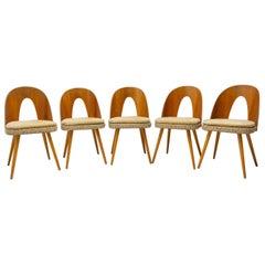 Mid Century Dinning Chairs by Antonín Šuman for Tatra Nábytok, Set of 5
