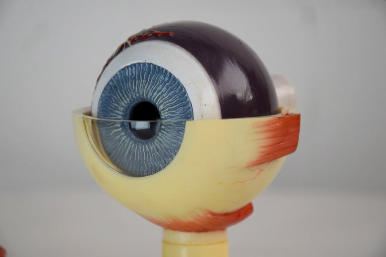 Mid-Century Modern Anatomical Eye Model Made in Western Germany For Sale 6