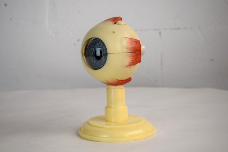 Plastic Mid-Century Modern Anatomical Eye Model Made in Western Germany For Sale