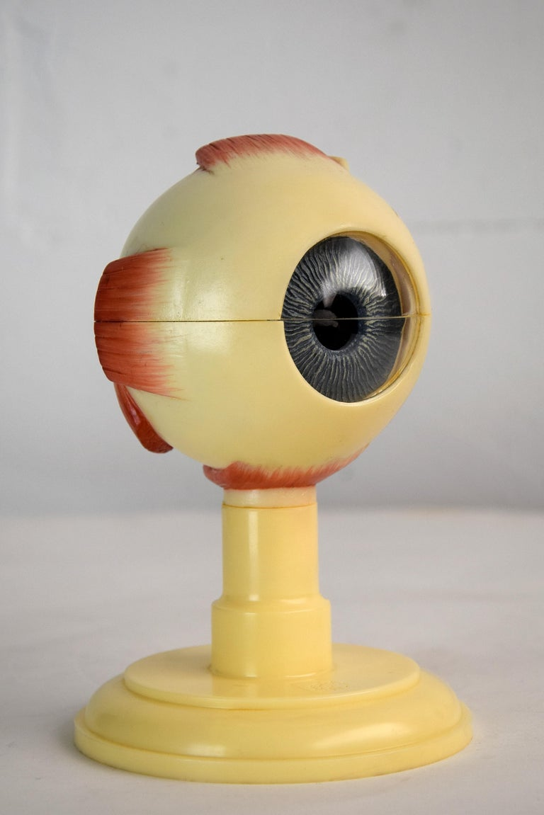 Mid-Century Modern Anatomical Eye Model Made in Western Germany For Sale 1