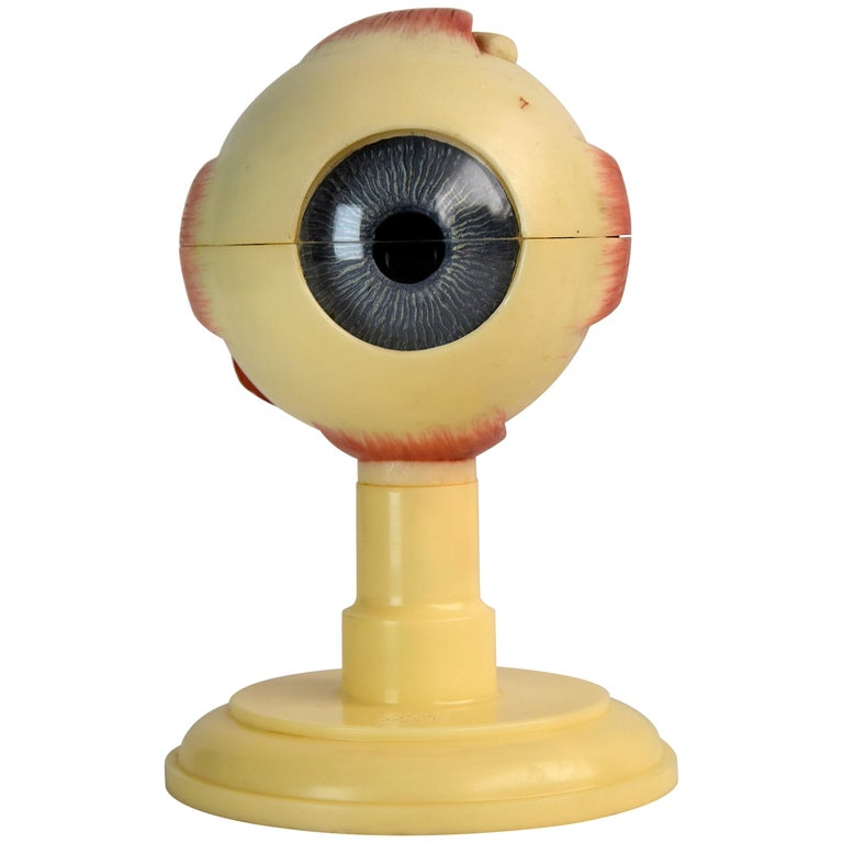 Mid-Century Modern Anatomical Eye Model Made in Western Germany For Sale