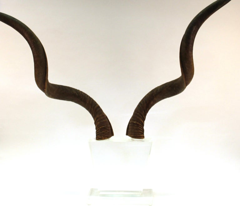 Mid-Century Modern Antelope Antlers on Lucite Stand For Sale 6
