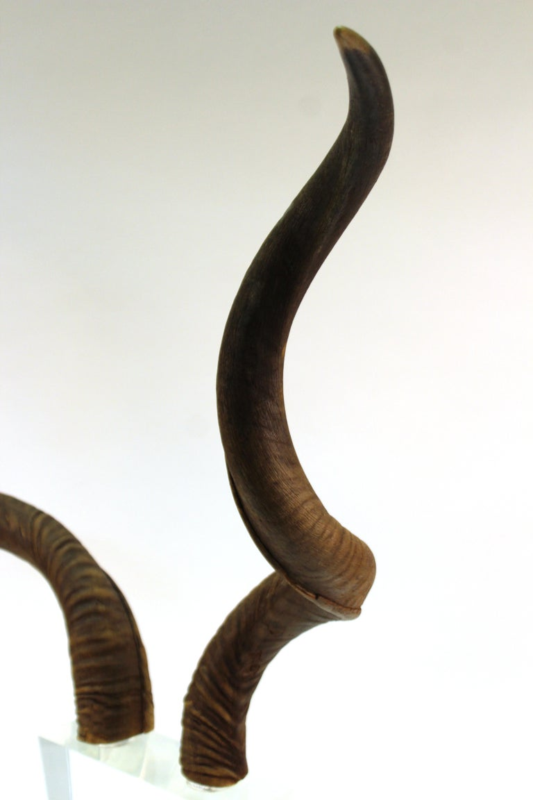 Mid-Century Modern Antelope Antlers on Lucite Stand For Sale 9
