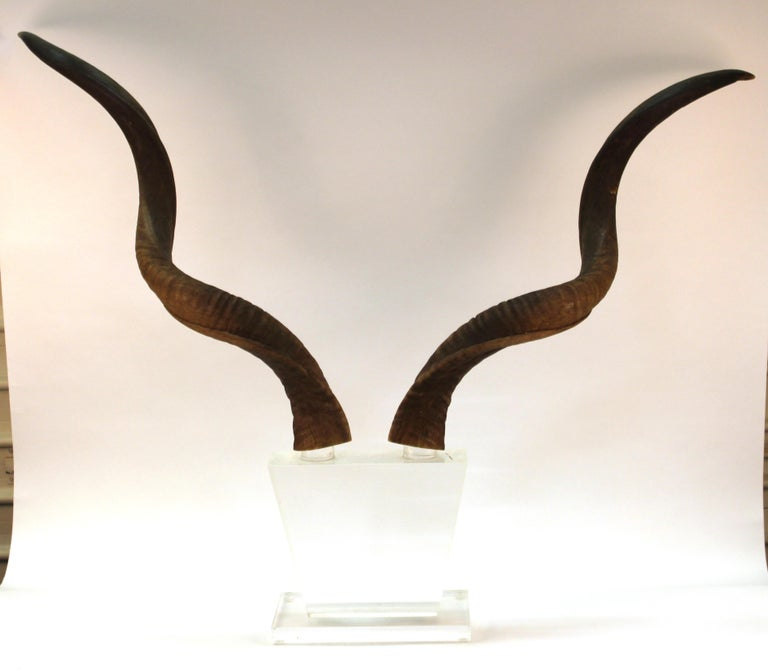 Mid-Century Modern Antelope Antlers on Lucite Stand In Good Condition For Sale In New York, NY
