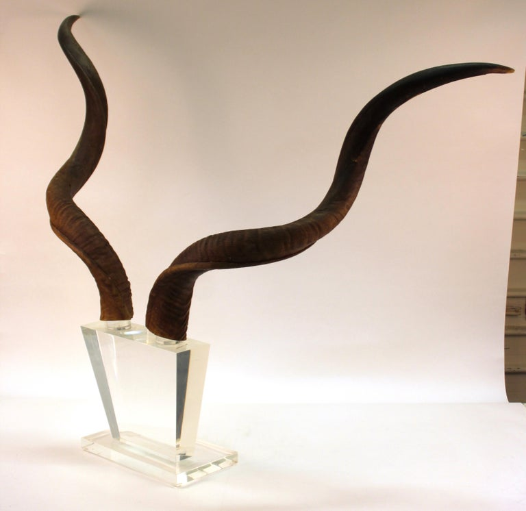 Mid-Century Modern Antelope Antlers on Lucite Stand For Sale 3