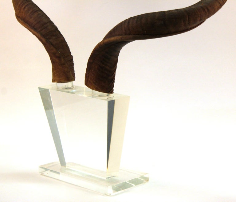 Mid-Century Modern Antelope Antlers on Lucite Stand For Sale 4