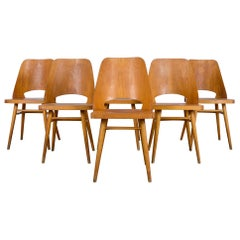 Mid-Century Modern Czech Dining Chairs, Set of Six