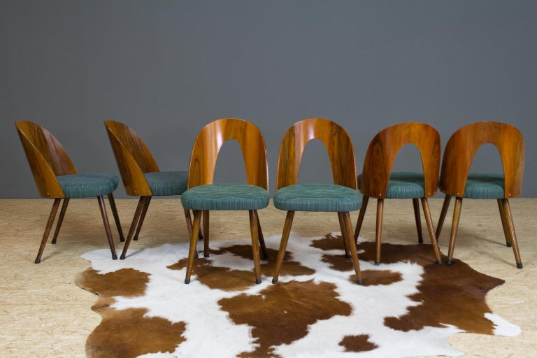 Elegant and Mid-Century Modern dining room chair by Antonin Šuman in Czechoslovakia. We have a matching set of 6 in stock. The bent, yet open plywood back is not only an eye catcher, but gives good comfort as well. Lovely grain in the wood.  The