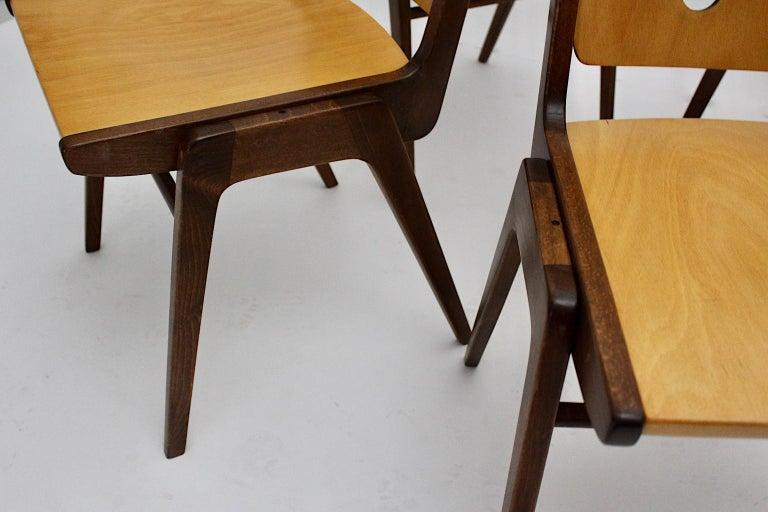 Mid-Century Modern Four Vintage Brown Bicolor Beech Dining Chairs Franz Schuster For Sale 10