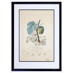 Mid-Century Modern Framed Salvador Dali Signed Drypoint Etching 1960s Grenade