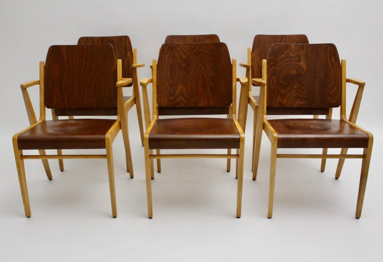 This set of six armchairs, bicolor colored, named Austro Chair was designed by Franz Schuster 1959 Vienna and executed by Wiesner-Hager, Austria. Franz Schuster was a very popular architect in this era. The armchairs were made of solid beechwood and