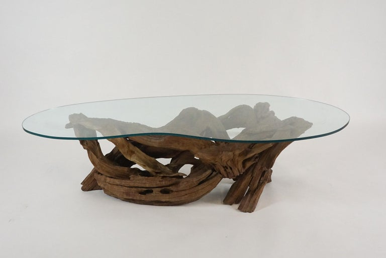 Stunning example of a Classic Mid-Century Modern driftwood coffee table. This species is quite heavy in weight with a lovely and perfectly complimentary biomorphic glass top.