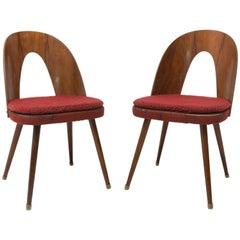 Midcentury Walnut Dining Chairs by Antonín Šuman for Tatra Nábytok, Czechoslov
