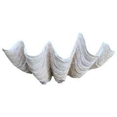 Mid Size South Pacific Tridacna Gigas Clam Shell with High Elbows