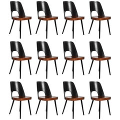 Midcentury Bicolored Dining Chairs by Oswald Haerdtl