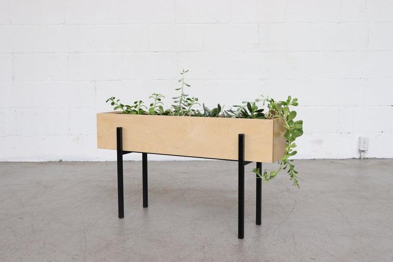 Birch wood box planter Designed to hold 32