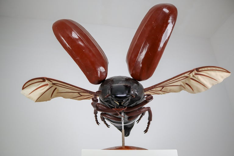20th Century Midcentury Large Early Anatomical Model of a Flying Beetle, Praque, 1950s For Sale