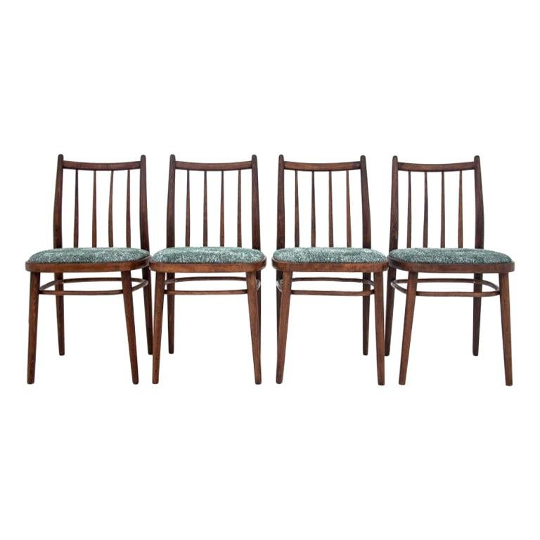 Midcentury Retro Dining Chairs After Renovation, 1950s