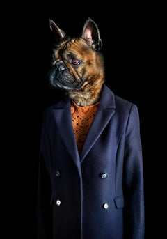 No.28 - Dog Dressed in a Blue Jacket, Dark, Portrait of a Dog